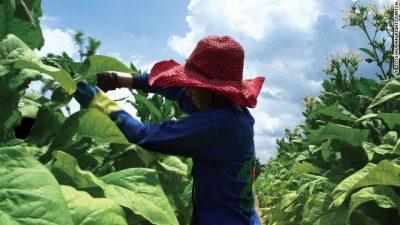 Preocupación por mayor trabajo infantil en Jujuy