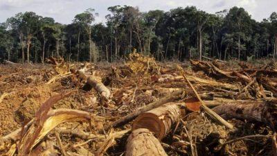 Buscan reforestar 12.000 hectáreas desmontadas en el norte salteño