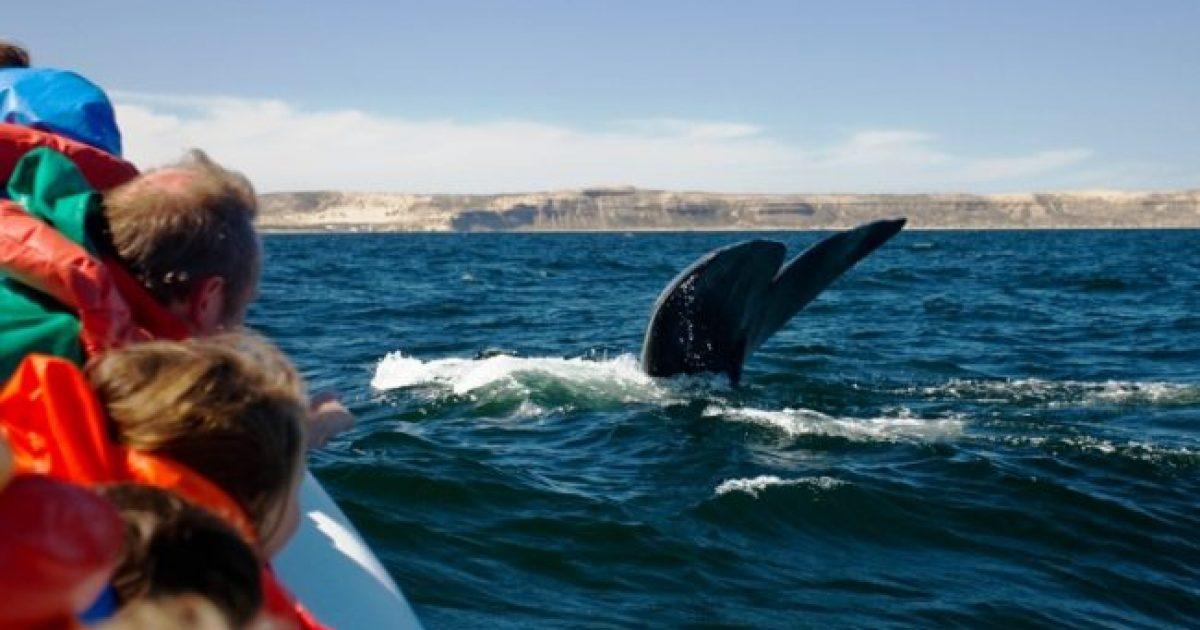 Temporada de Avistaje de Fauna Marina en Puerto San Antonio Oeste
