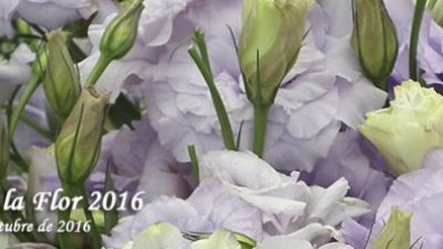 Fiesta Nacional de la Flor 2016, Escobar, Del 24 de septiembre al 10 de octubre