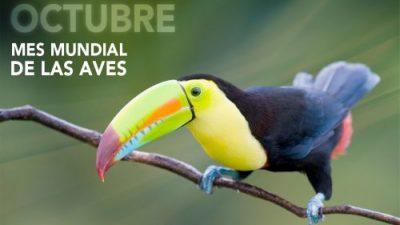 Festival Mundial de Aves enTrelew,13, 14 y 15 de octubre