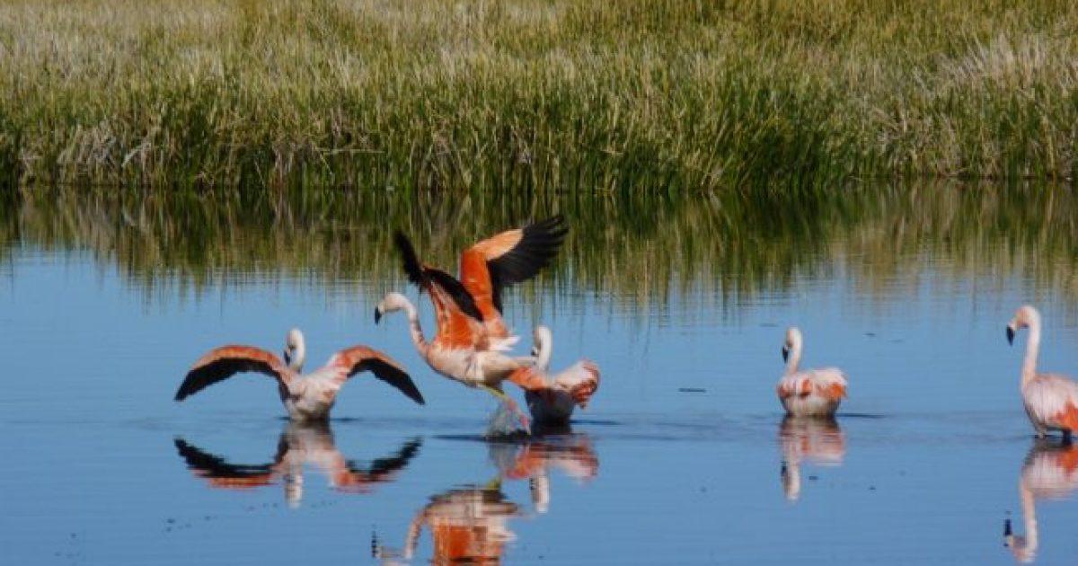 Neuquén: El avistaje de aves, una nueva manera de relacionarnos con la naturaleza