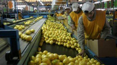 Los productores de limones en alerta