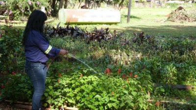 El vivero municipal de Posadas produce unos 25 milárboles y plantas por año