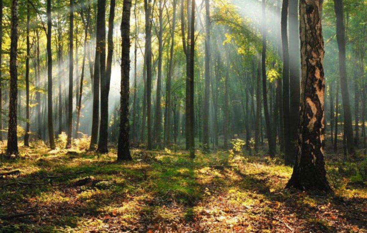 La otra cara del proyecto para sancionar la Ley de Bosques bonaerenses: Denuncian intereses inmobiliarios