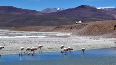 Visita a la reserva Laguna Brava