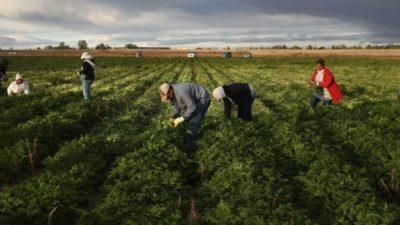 Los peones rurales siguen con los peores ingresos