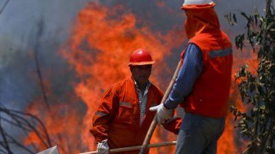 Importantes incendios provocaron el mayor desastre forestal de la historia de Chile