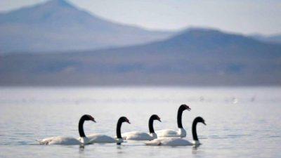 Mendoza, con una ley, se encamina a proteger sus cientos de humedales