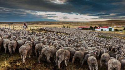 Se profundiza la concentración de la tierra en la Argentina