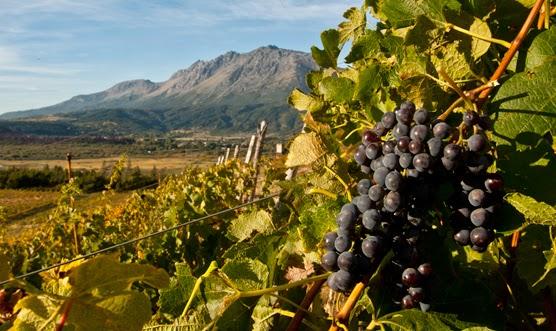"""Planifican la futura """"Ruta del Vino"""" en localidades de Chubut"""