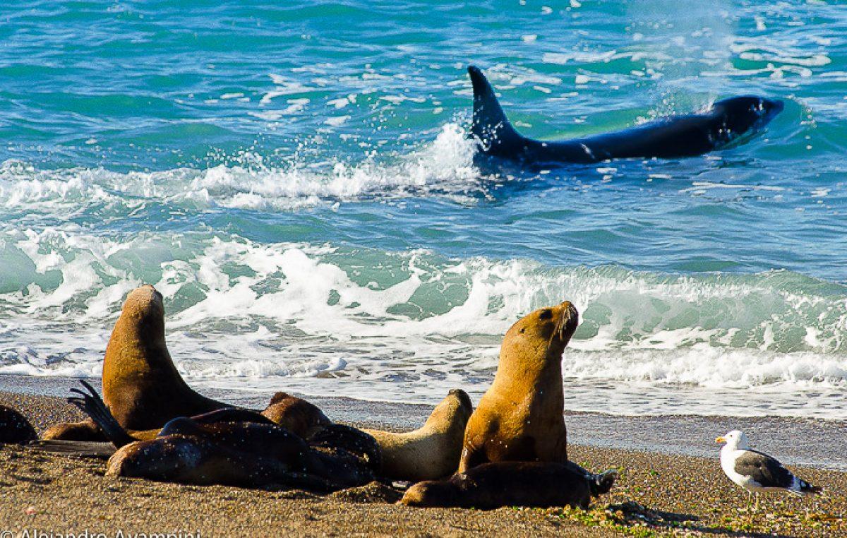 Península de Valdés: sede de uno de los espectáculos naturales más impresionantes