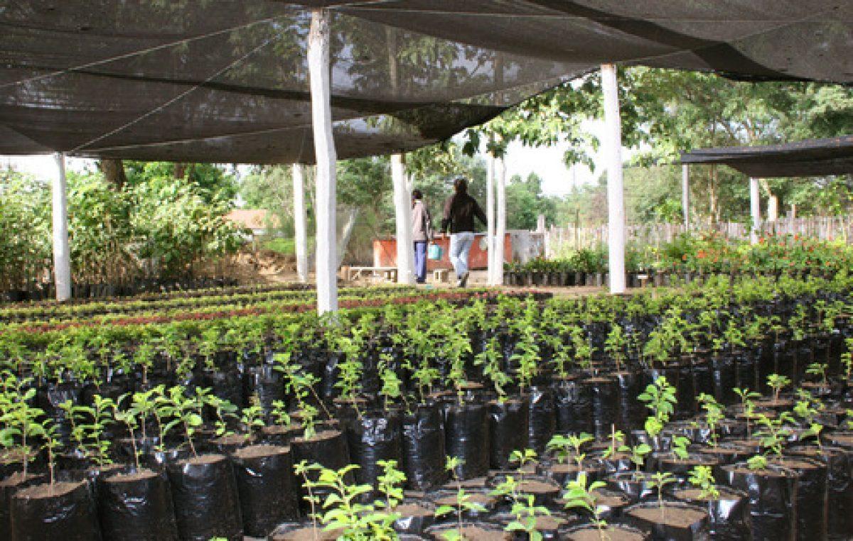 La Secretaría de Ambiente impulsa la creación de viveros municipales en Salta