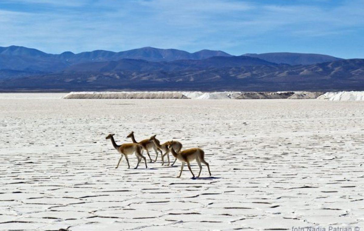 Un desierto blanco en el norte