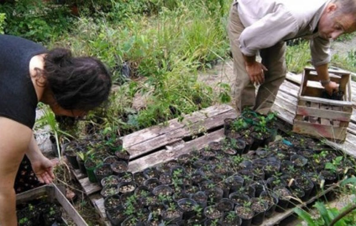 Gualeguaychú plantó tres mil árboles en tres meses
