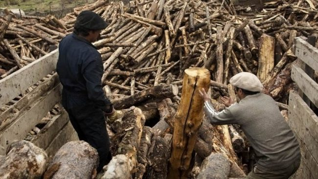 Operativo Leña: ya se invirtieron 29 millones de pesos en el reparto a familias neuquinas sin gas