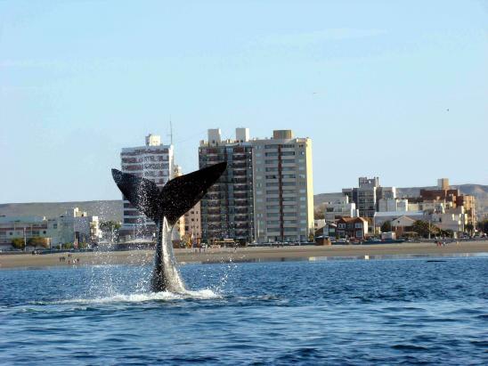Puerto Madryn es Municipio No Nuclear desde el año 1991