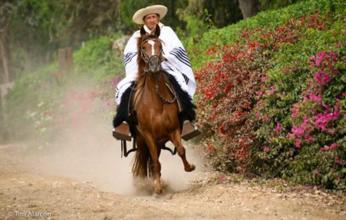 Semana de los caballos Peruanos de Paso en Salta