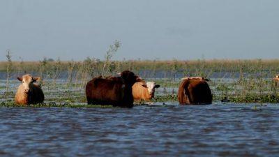 Productores correntinos, en emergencia: Por las lluvias murieron 50 mil animales