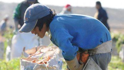 La UCA determinó que un millón de niños de entre 5 y 17 años realiza algún trabajo