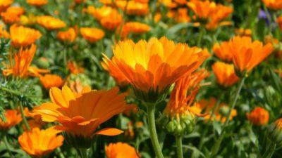 Rosario: Un curso municipal sobre plantas medicinales con récord de inscriptos