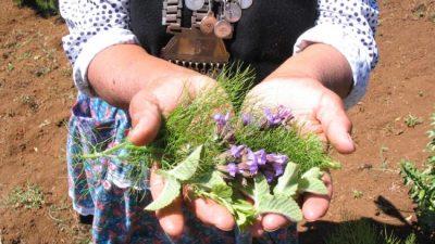 Drama mapuche: el Senasa les prohíbe una práctica milenaria garantizada por la OIT
