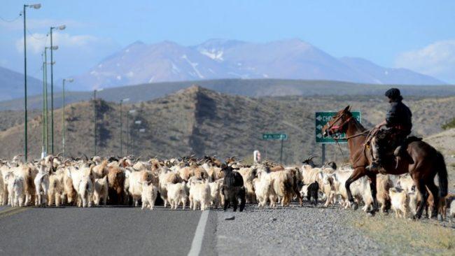 Neuquén: Destinan $3 millones para ayudar a pymes de zonas rurales
