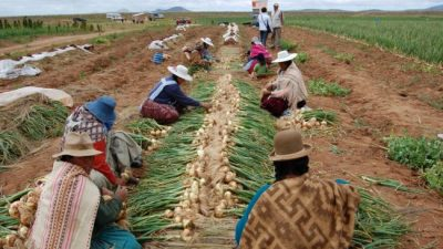 Bolivia produce el 95% de los alimentos que consume