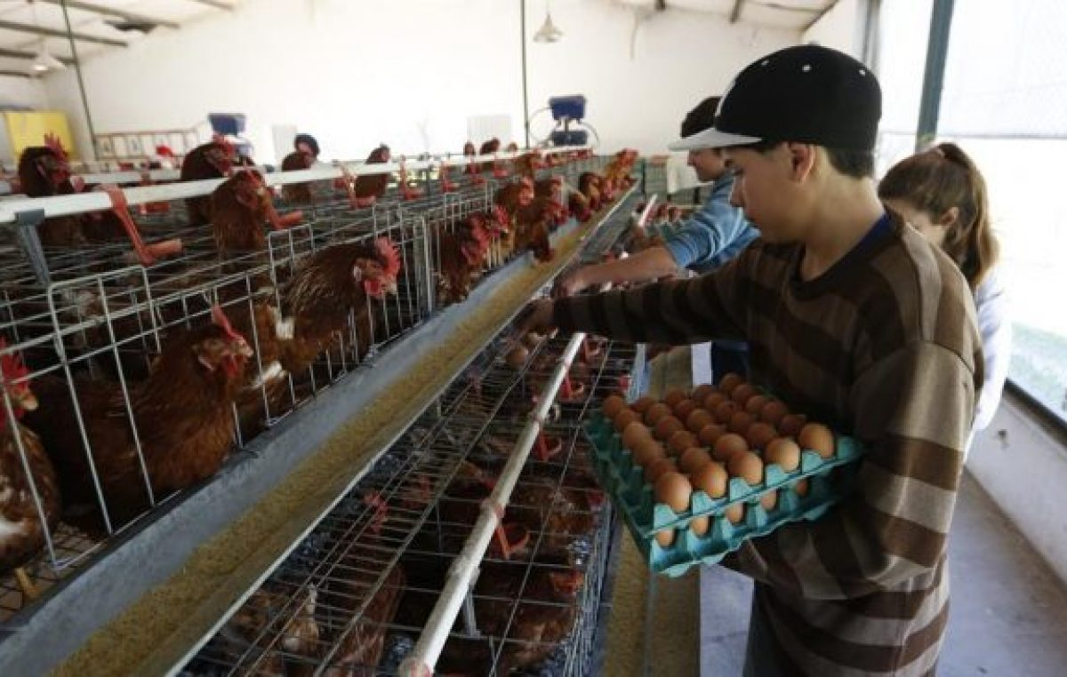 En Ayacucho una escuela agraria abastece de huevos a hogares de ancianos, comedores y hospitales