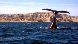 Contrariamente a la opinión ministerial, preocupa la poca actividad turística en la región de Madryn