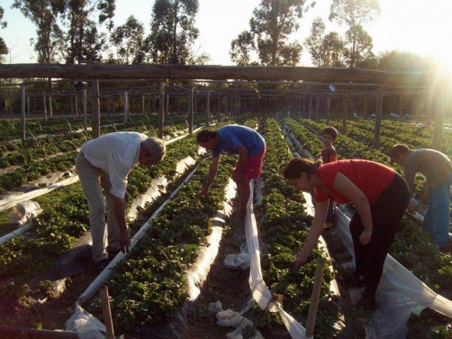 Campo para pocos: el Gobierno dejó sin ayuda a miles de pequeños productores rurales