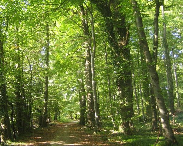 Buenos Aires: Denuncian que la Ley de Bosques esconde la entrega de terrenos a grupos inmobiliarios