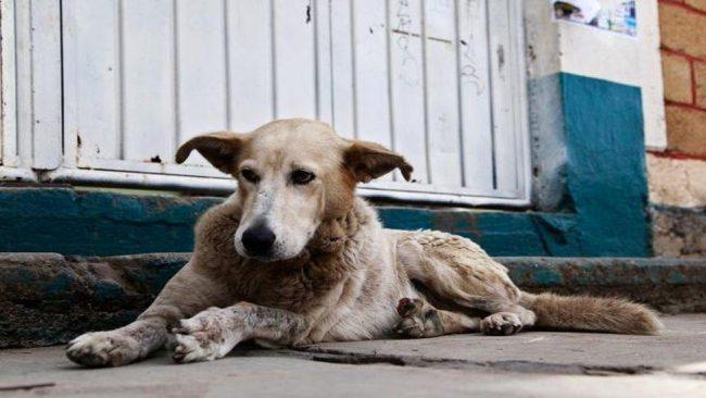 Rivadavia: Proponen que quienes adopten perros callejeros paguen menos impuesto municipal