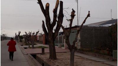 La multa al intendente de Junín por dañar más de 2700 árboles quedó en veremos