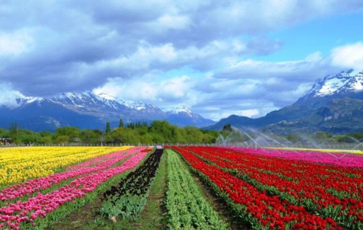 Un pueblo con aroma a tulipán en el sur argentino
