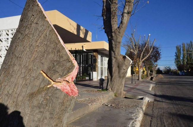Multa millonaria a Junín por una drástica poda del arbolado público