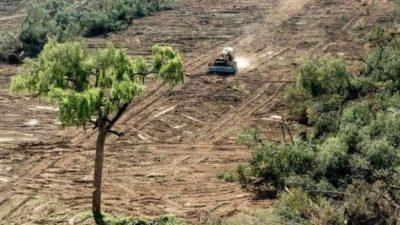 Santa Fe perdió el 82 por ciento de sus bosques nativos en los últimos 80 años
