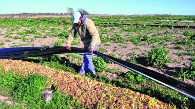 La crisis de la cebolla pone en riesgo miles de empleos