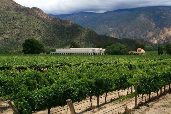 Cafayate: vino, naturaleza y placer
