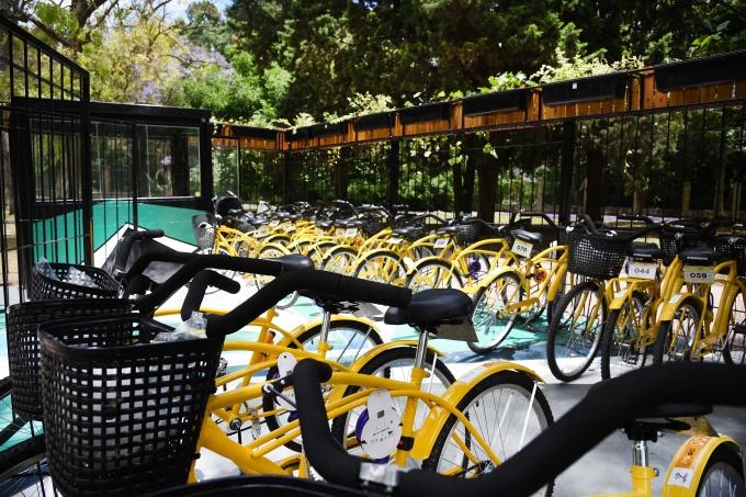 Movete en bici: Los platenses ya pueden pedir una bicicleta prestada en el Bosque