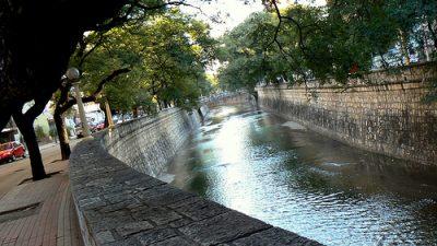 Singular proyecto para que crezca el parque de árboles en la ciudad de Córdoba