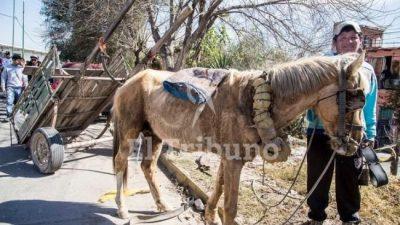 Carreros salteños entregaron 83 caballos