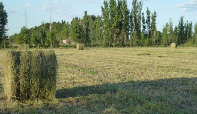 Buscan que chacras familiares exporten alfalfa de Río Negro a los Emiratos Árabes