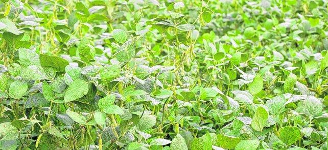 Rosario: Buscan que sojeros locales se reconviertan a la agroecología