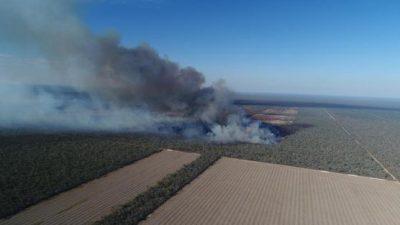 La desforestación sudamericana en las mesas europeas