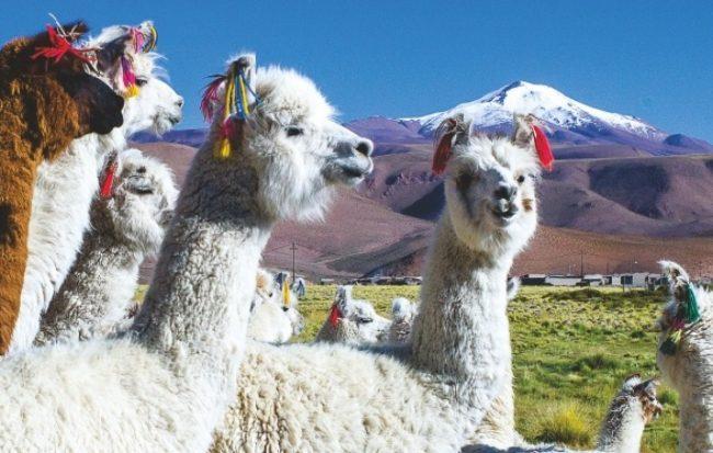 Pastos Grandes, en el corazón de la Puna, tuvo su fiesta ganadera