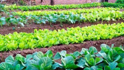 Avanza el desarrollo de huertas sustentables en Chajarí