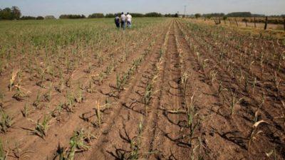 Declaran la Emergencia Agropecuaria en otros 24 municipios bonaerenses: suman 51 distritos