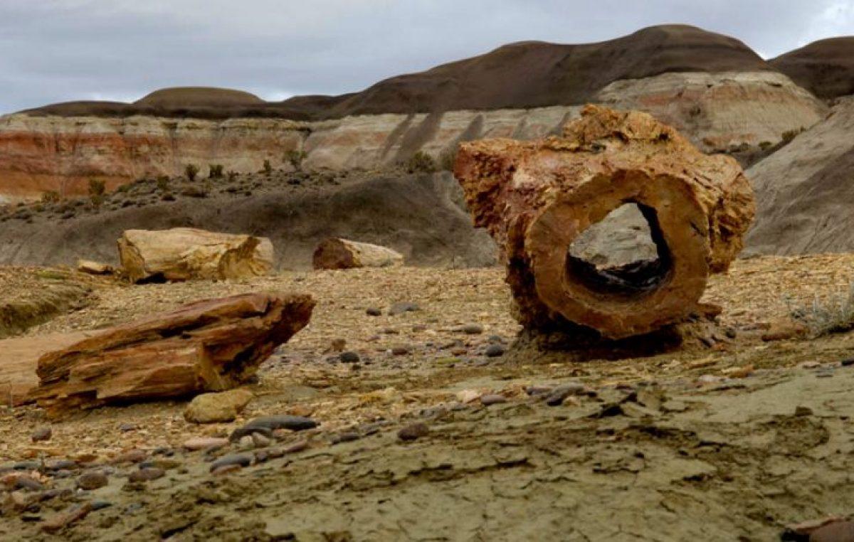 Naturaleza de impacto: conocé el bosque petrificado de Chubut