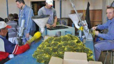 Peligra el futuro de Tinka, la fábrica santafesina de bolitas, la única de Sudamérica
